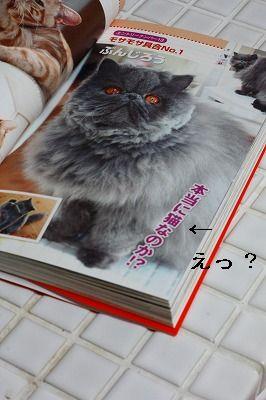 猫なのか?