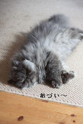 4_20100506111147.jpg