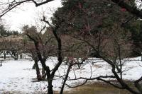 栗林公園001