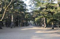 津田の松原002