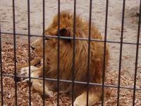 旭山動物園014