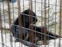 旭山動物園015