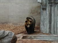 旭山動物園016