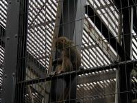 旭山動物園017