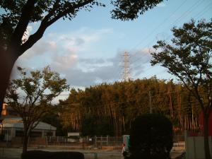 ミルヴィラージュの向かいの竹林