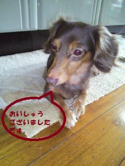 001_convert_20111216151530_20111217000834.jpg