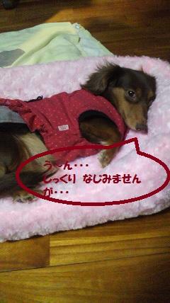 002_20120219010313.jpg