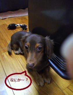 004_convert_20111208082234.jpg