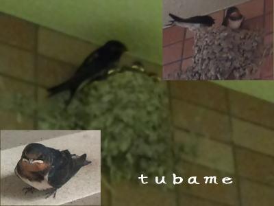 tubame_20100830221650.jpg
