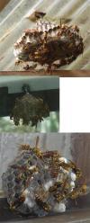 部屋の前にはハチの巣×3