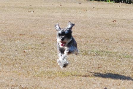 なんちゃって飛行犬