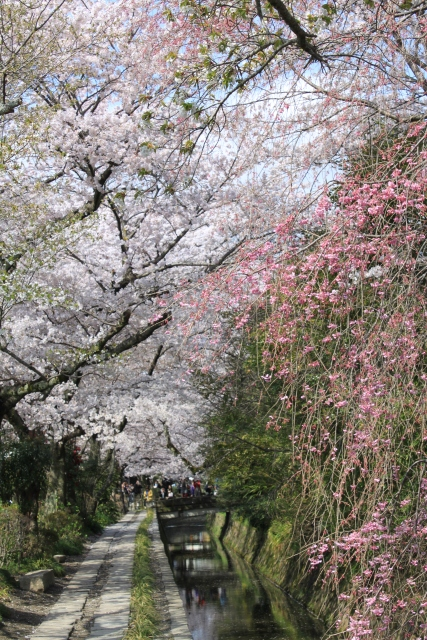 kyoto015.jpg