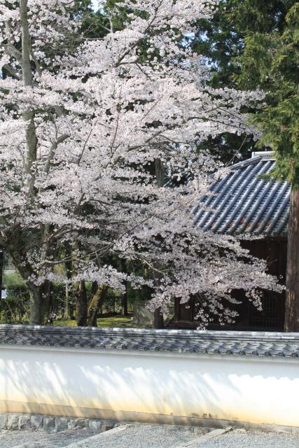 kyoto020.jpg