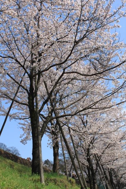 kyoto023.jpg