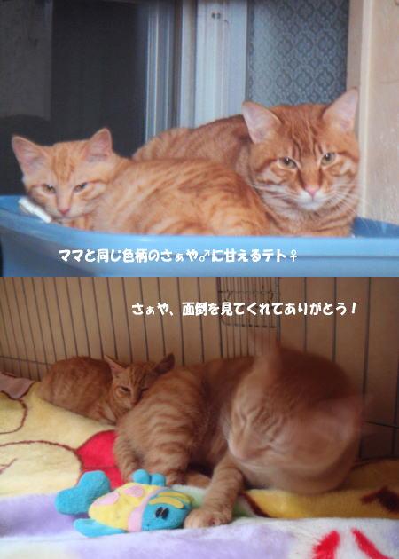 2010115a_20100521045546.jpg