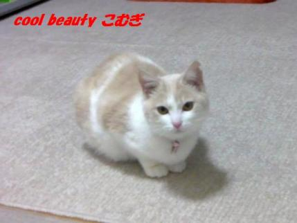 mkomugi_006_convert_20100327004020.jpg