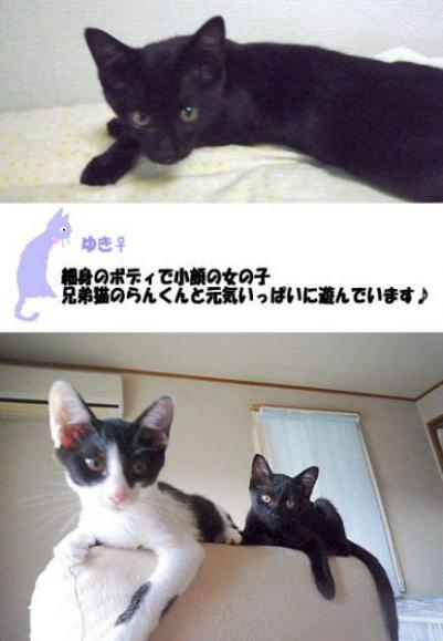 yuki01s_20100408214014.jpg