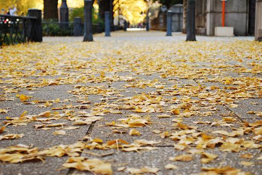 秋 落ち葉