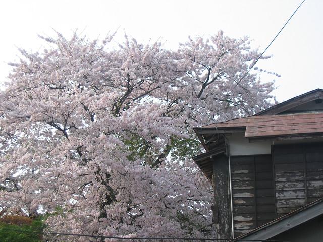 2010_05_05_2.jpg