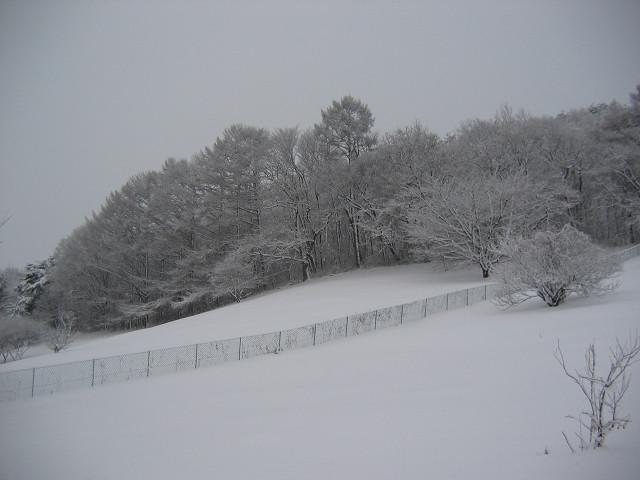 2010_12_27_2.jpg