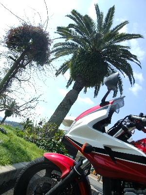 2010_0314バイク0327