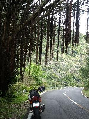 2010_0314バイク0550