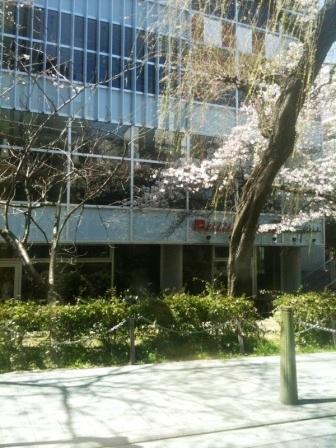 木屋町桜2