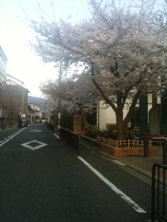 御所南小学校桜