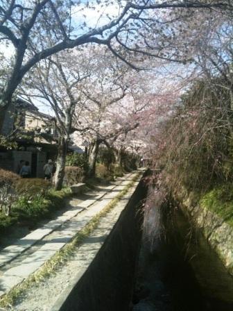 浄土寺桜2