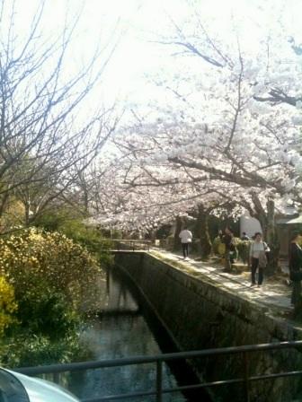 浄土寺桜4