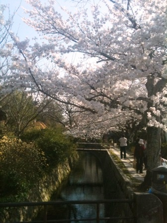 浄土寺桜3
