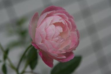 091008-1.jpg