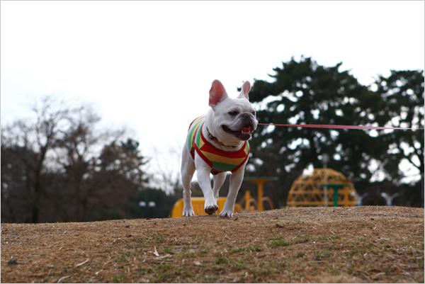 フォトスタジオ大阪 andphoto(アンドフォト) 「梅林お散歩」