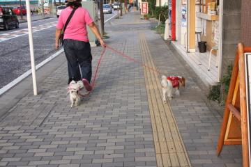 時間が早かったので横山公園にお散歩に行きました