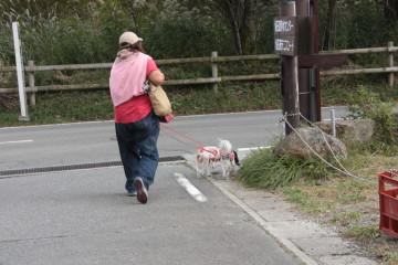 仙石原のすすきを見に行きました