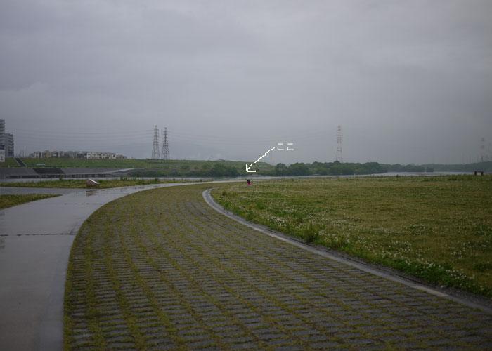 100519雨のお散歩