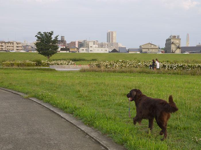 100707お散歩2