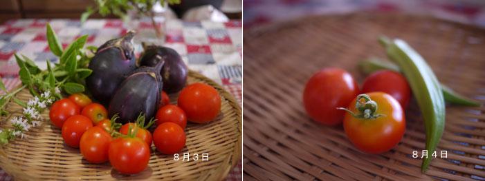 100804収穫野菜