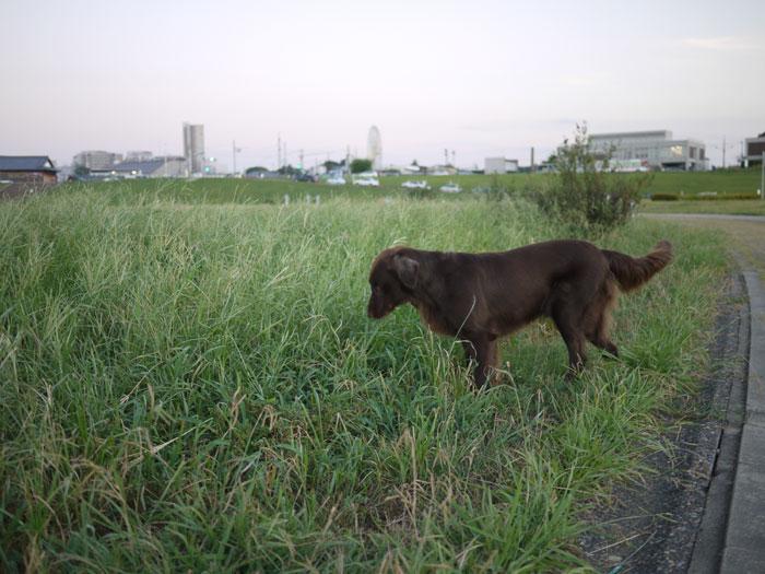 20100909河川敷3