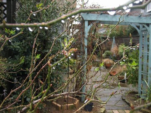 サマースノーごしの冬の庭