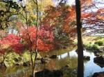 紅葉 庭園