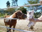 お馬さんとマリア