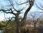 木の上にジャンプ