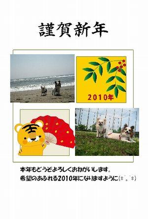 2010newyear2.jpg