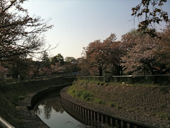 善福寺川公園