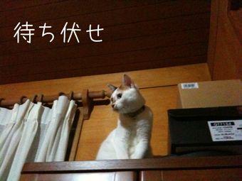 IMG_2429chibiko.jpg