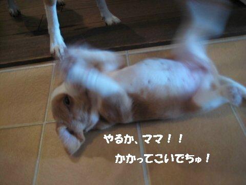 IMG_3270_sh01.jpg