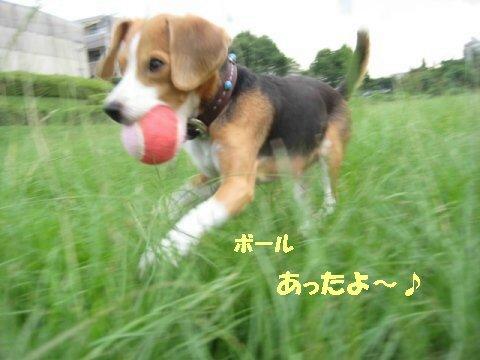 IMG_3775_sh01.jpg