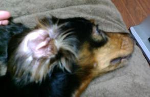 きれいな耳