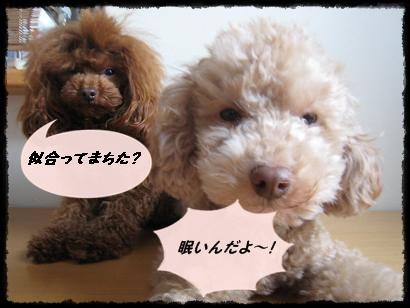 ライピーNo5
